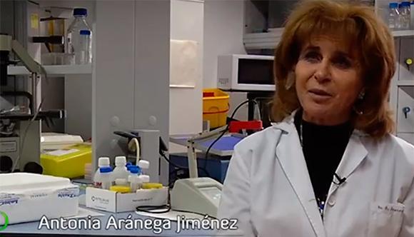 Antonia Aránega