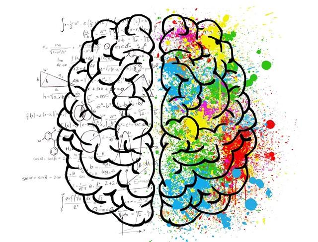 Cerebro dibujo