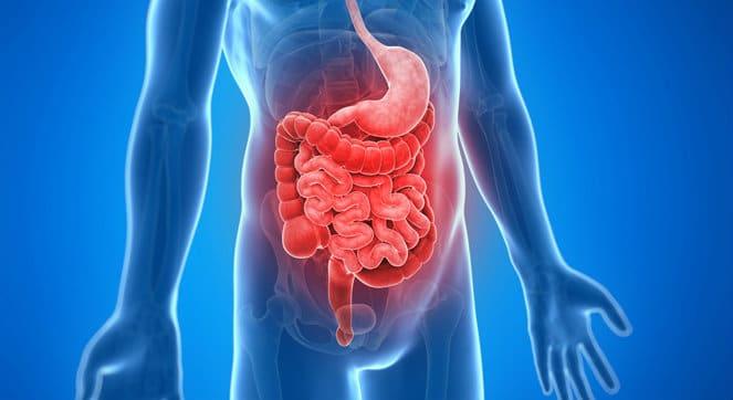 Intestino y estómago